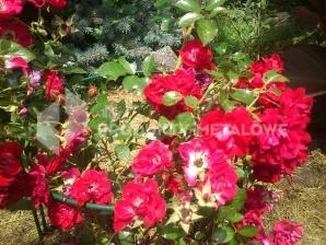 Podpora do kwiatów Typ S H=34,5 cm