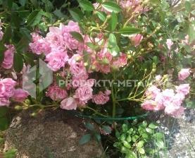 Podpora do kwiatów Typ SM H=50 cm