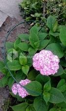 Podpora do kwiatów DUŻA Typ M H=70 cm średnica 50 cm komplet 2 sztuki