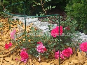Podpora do kwiatów Typ L H=100 cm